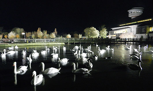 Slimbridge centre by Autumnwatch floodlights
