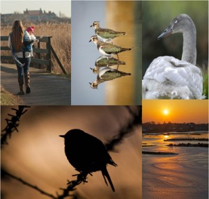 WWT Photography Competition - winter winners for London