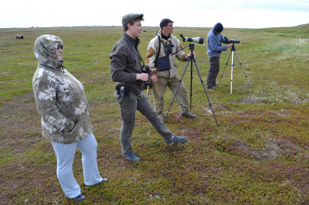 The Anglo-Russian team monitoring the birds after release (c) Anastasia Sestnova