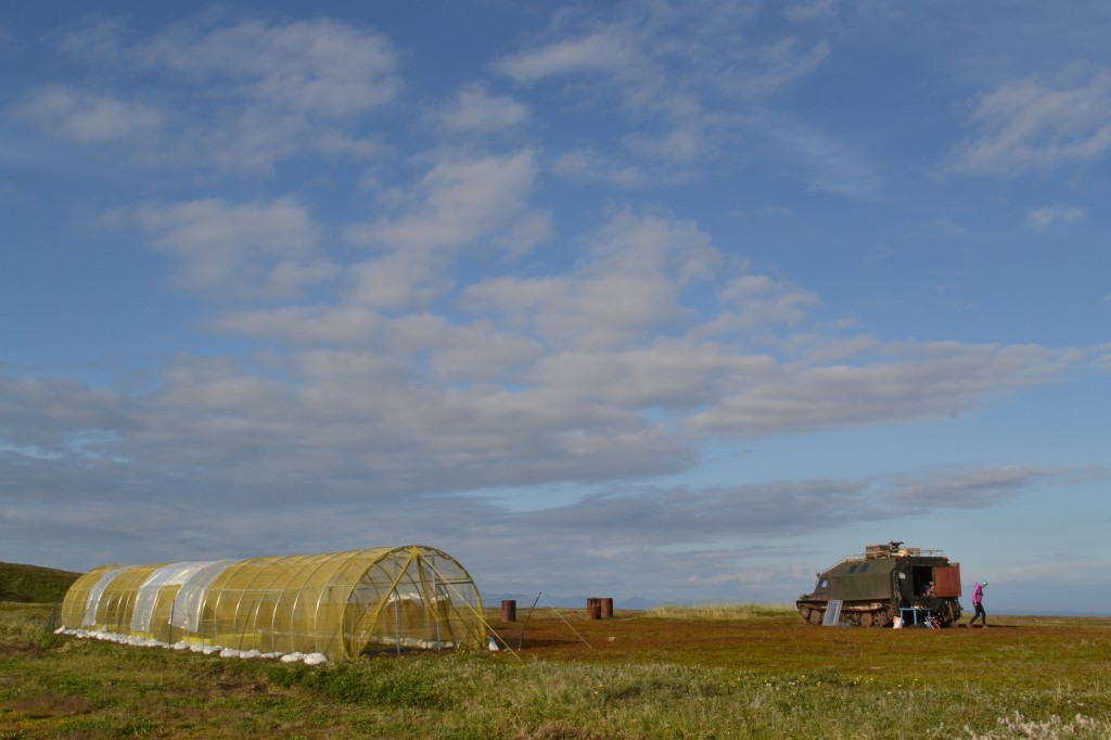 The aviary built for the young birds on the tundra (c) Anastasia Sestnova