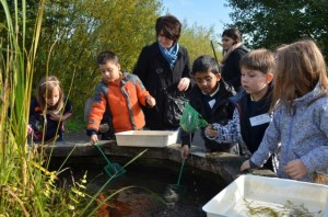 School pond dipping