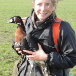 WWT's Anne Harrison with red-breasted gosoe fitted with tracking device (c) Kane Brides WWT