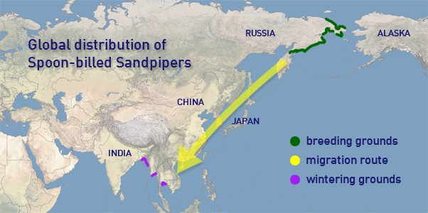 Map of distribution of spoon-billed sandpipers