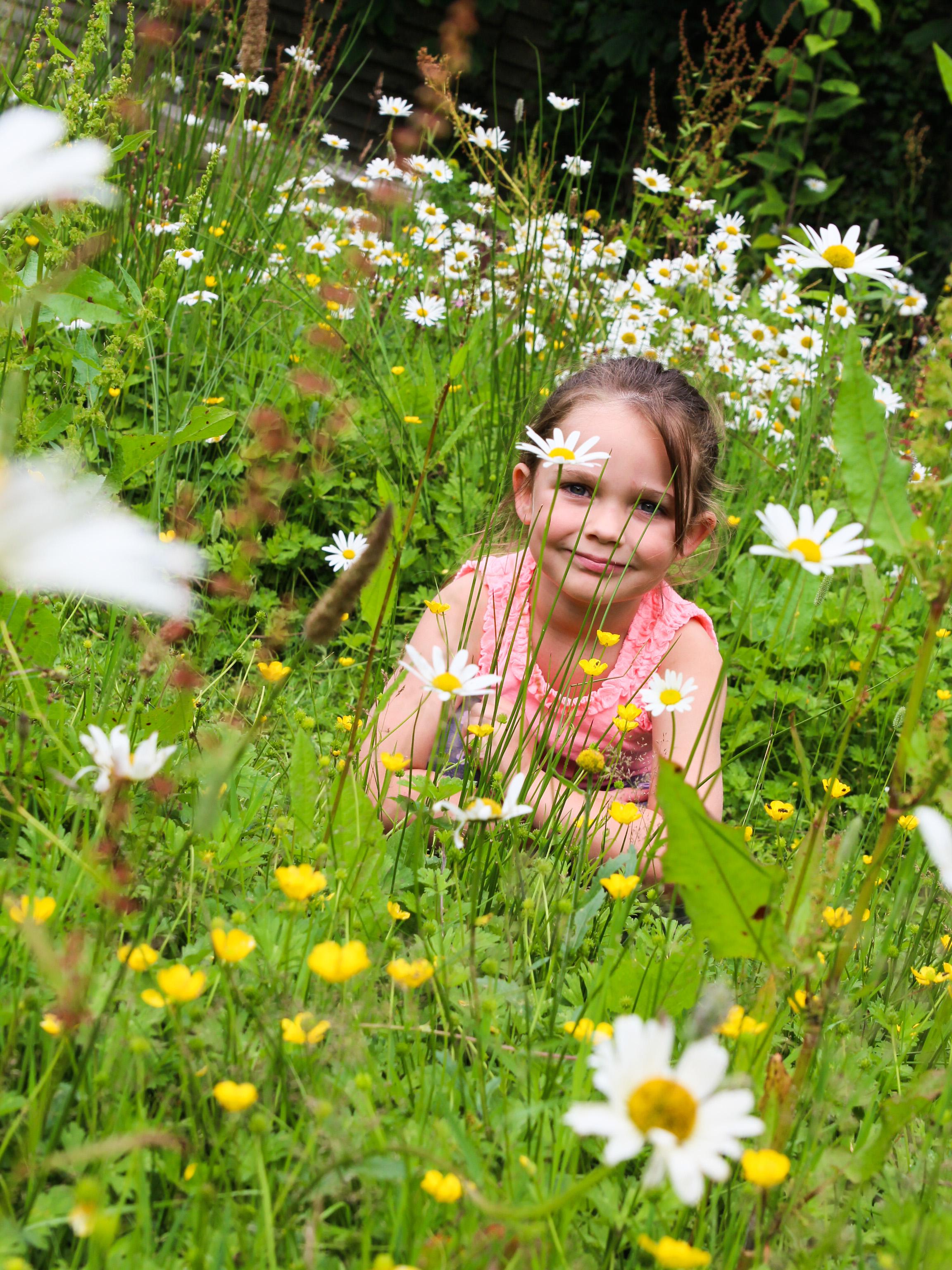 Sensory Garden Daisies