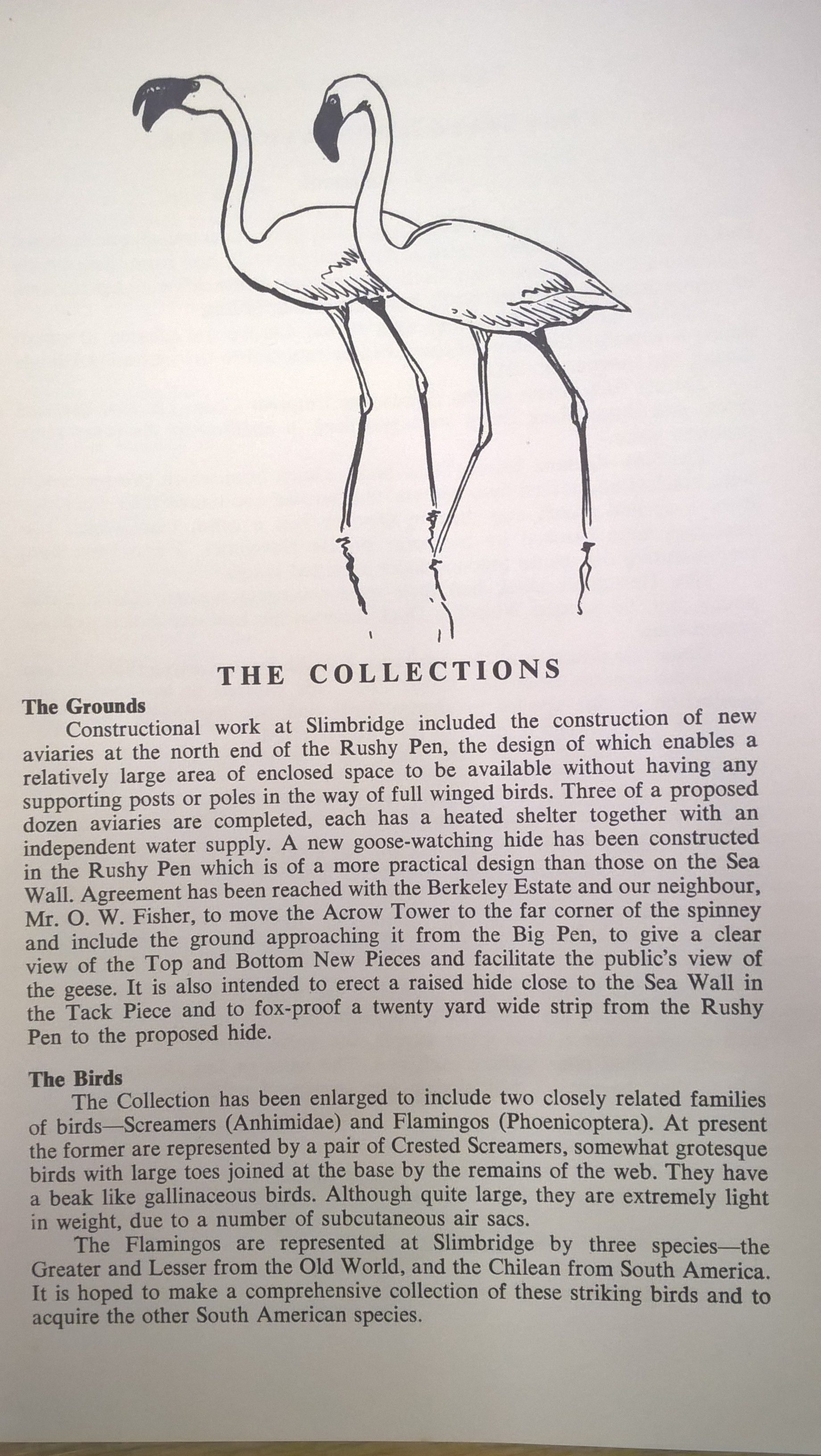 An introduction to the arrival of the first flamingos at Slimbridge, from the Wildfowl Trust Report 1961. Copyright: WWT.