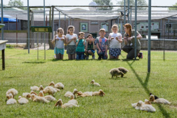This May half term sees the return of the award winning egg-to-duckling experience at WWT Martin Mere Wetland Centre.        The event, from Saturday 27 May to Sunday 4 June, allows visitors to have this unique opportunity to discover how ducklings develop inside an egg, hatch out of the shell and...