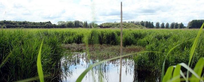 Fenland farmer wins Marsh award for wetlands