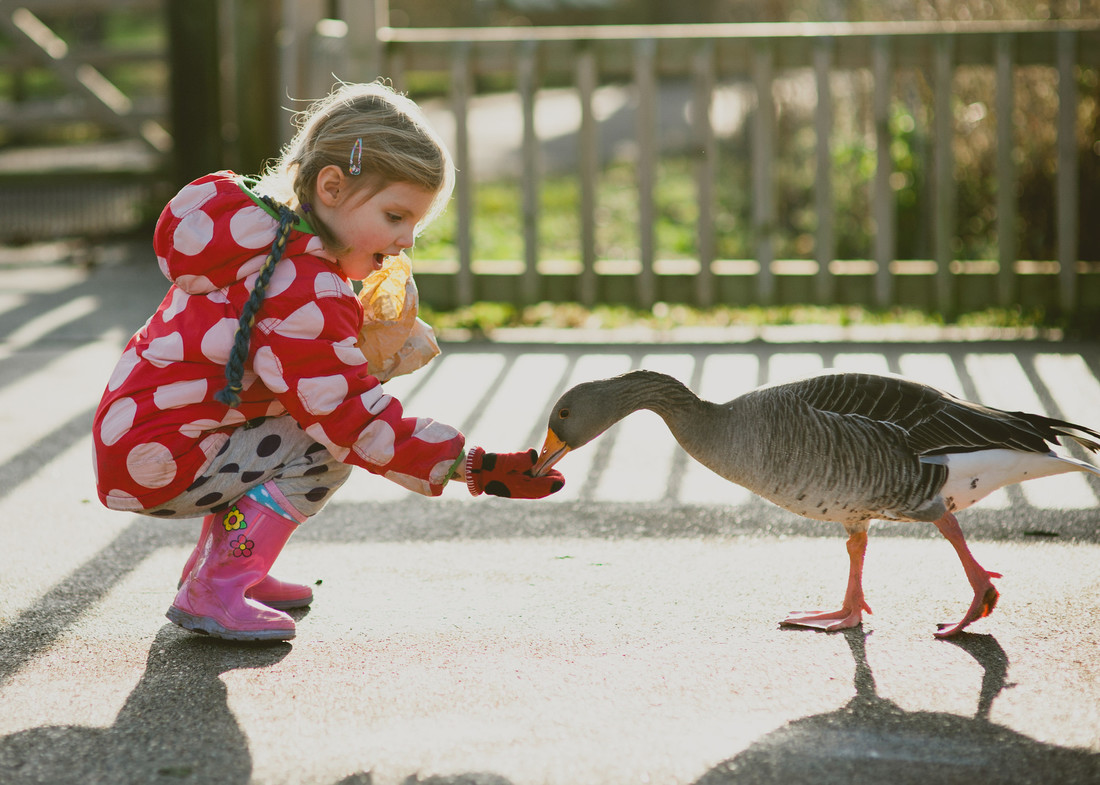 Slimbridge becomes an official Learning Destination for The Children's University