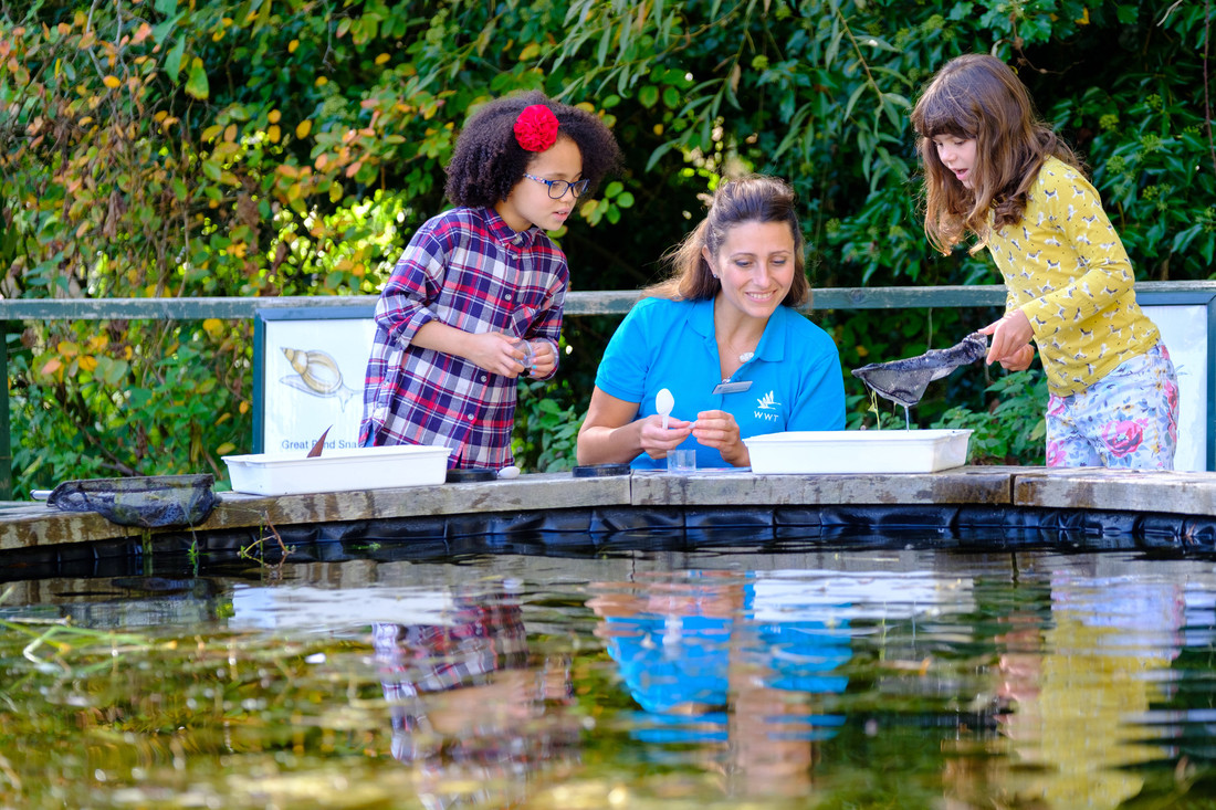 View: Pond Dipping