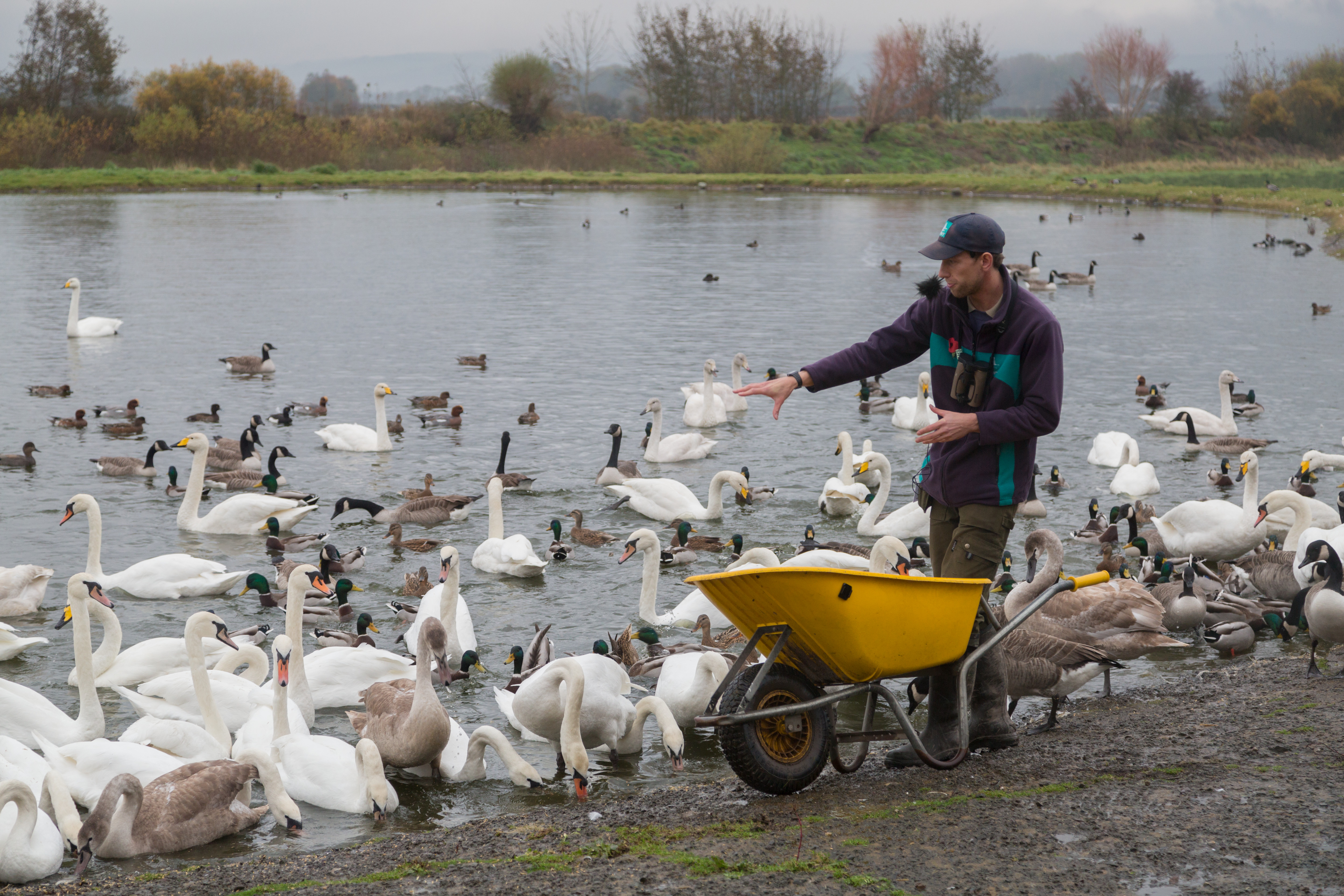 View: Wild Swan Feeds