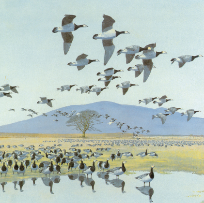 Barnacle geese with Criffel beyond (4444)