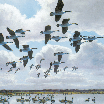 Honkers against a cumulus sky (4446)