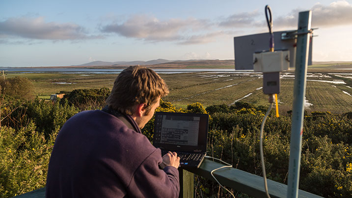 Monitoring geese on Islay