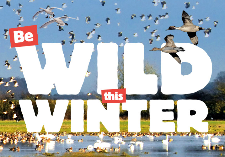 Be Wild this Winter