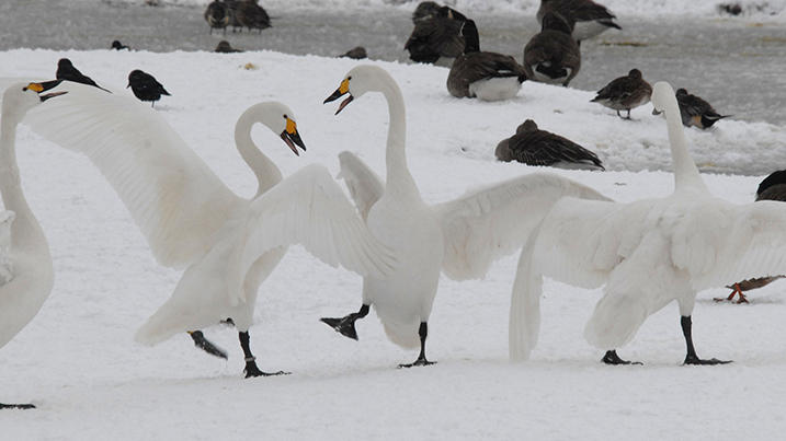 Spring migration after the snow!