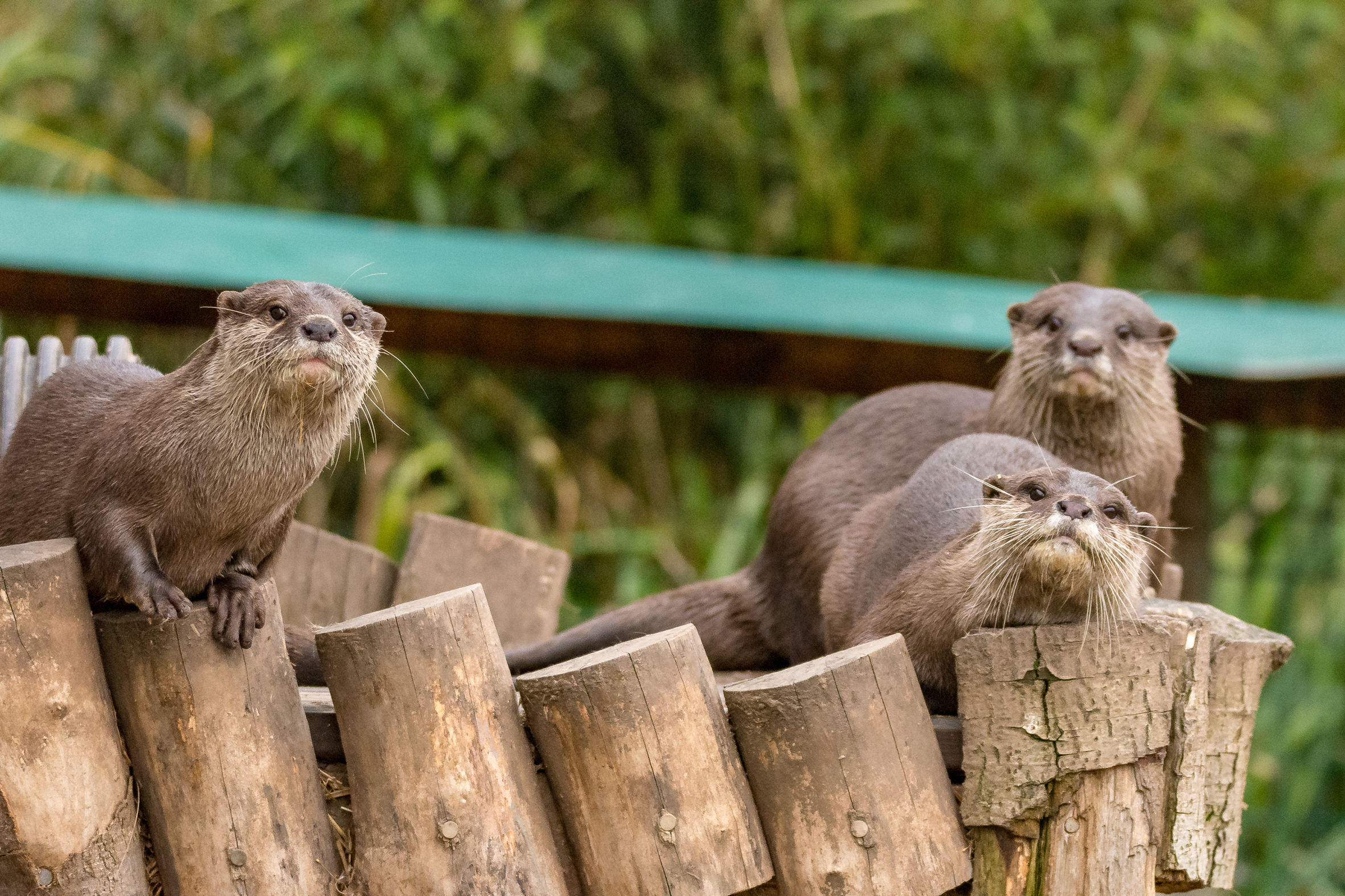 View: Daily otter feed
