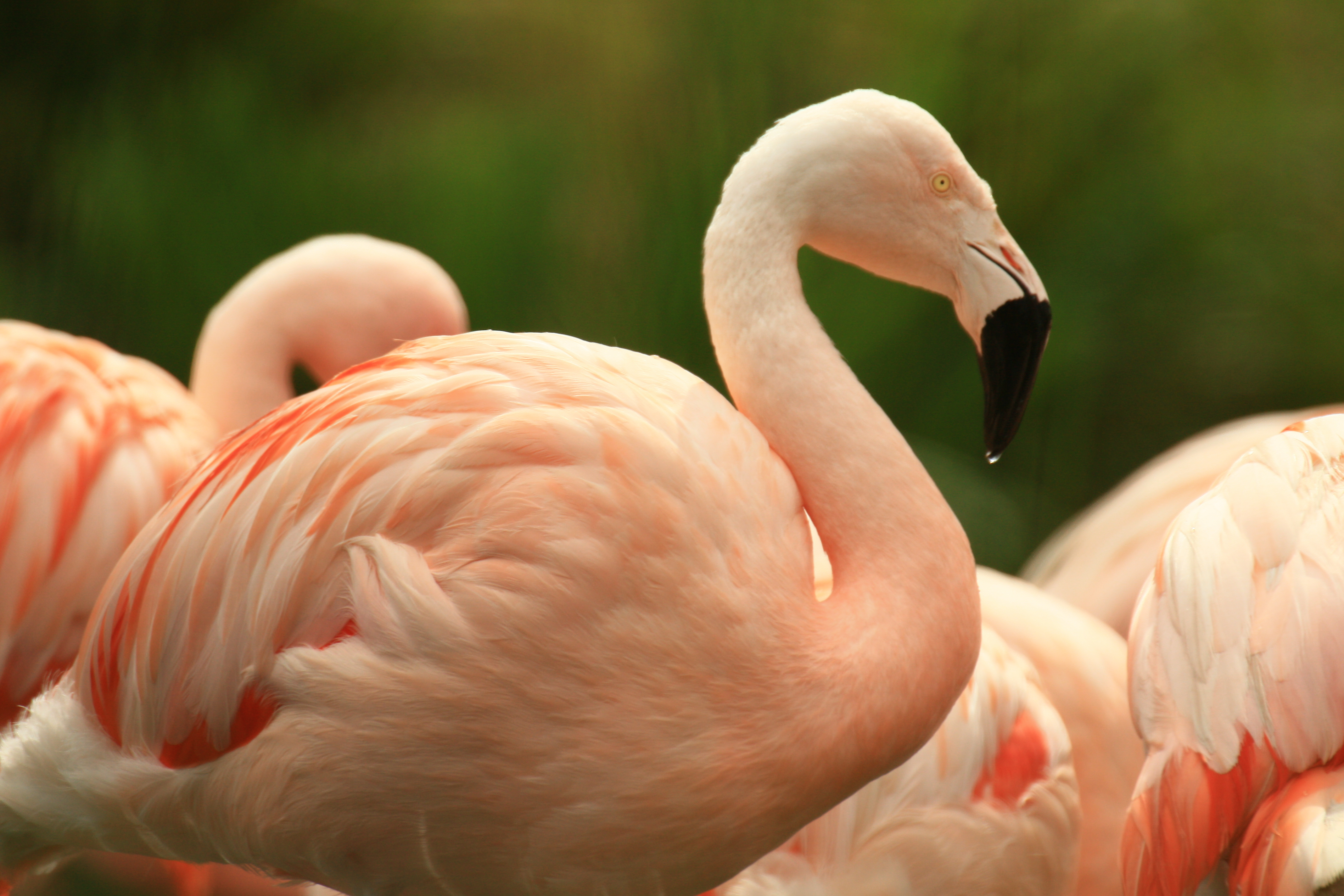 View: Daily flamingo talks