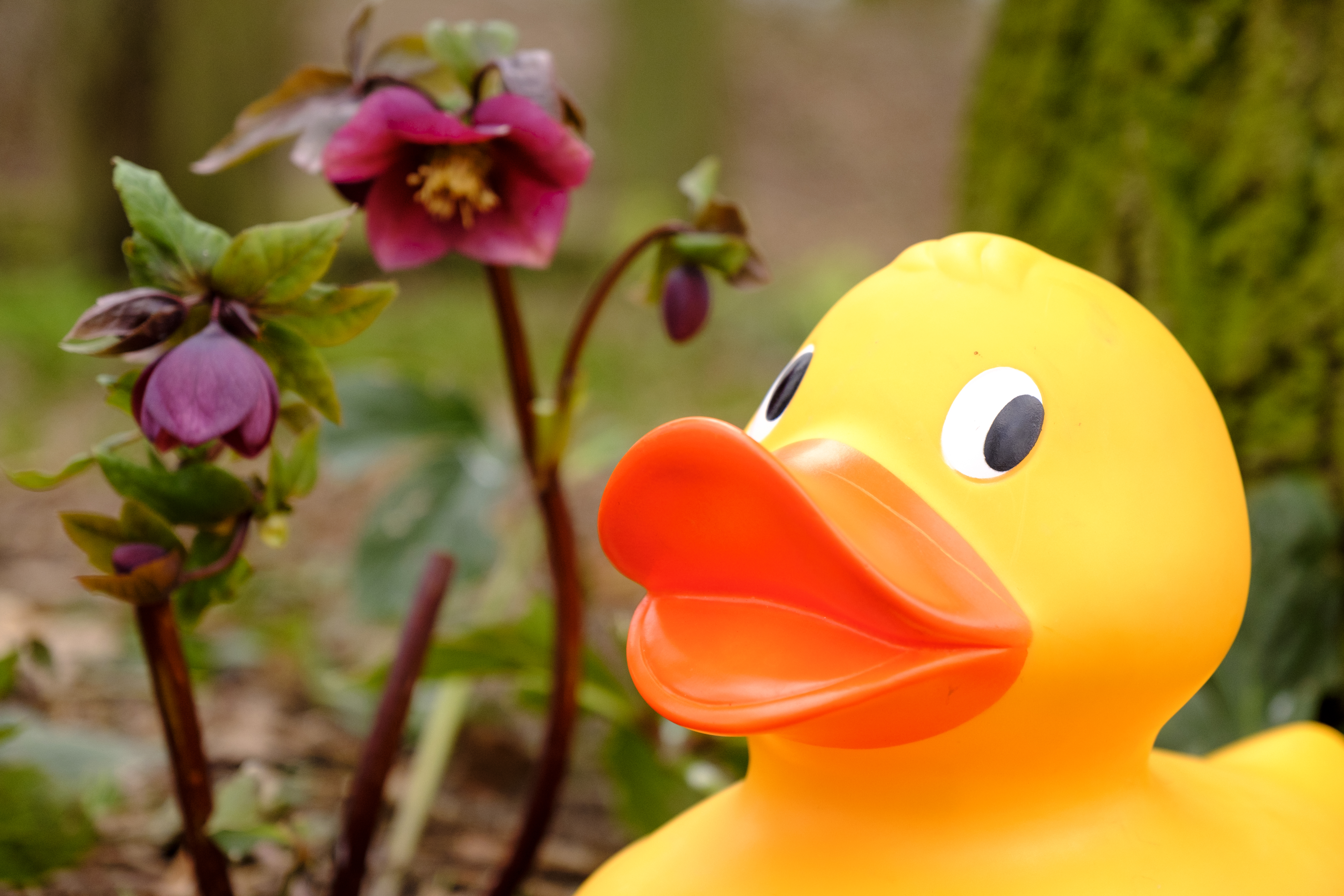 View: GIANT Easter Duck Trail