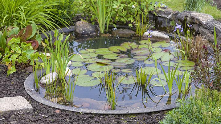 gardening for wetlands
