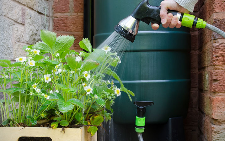 Tips for saving water in the garden