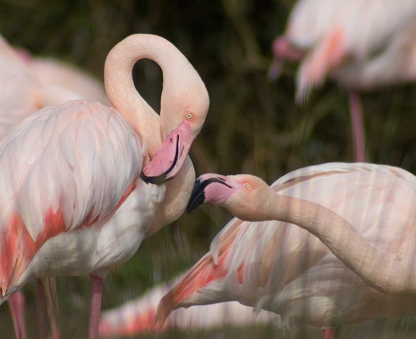 WWT Slimbridge wins Gold for Research at the National Zoo and Aquarium Awards 2019