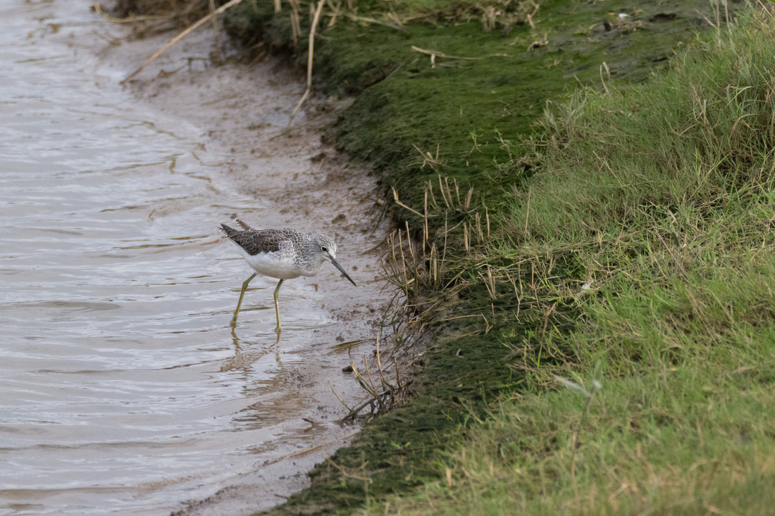 Recent sightings 6th - 9th July