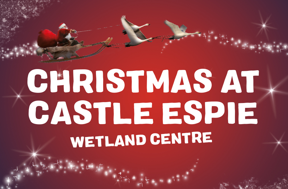 View: Christmas at Castle Espie