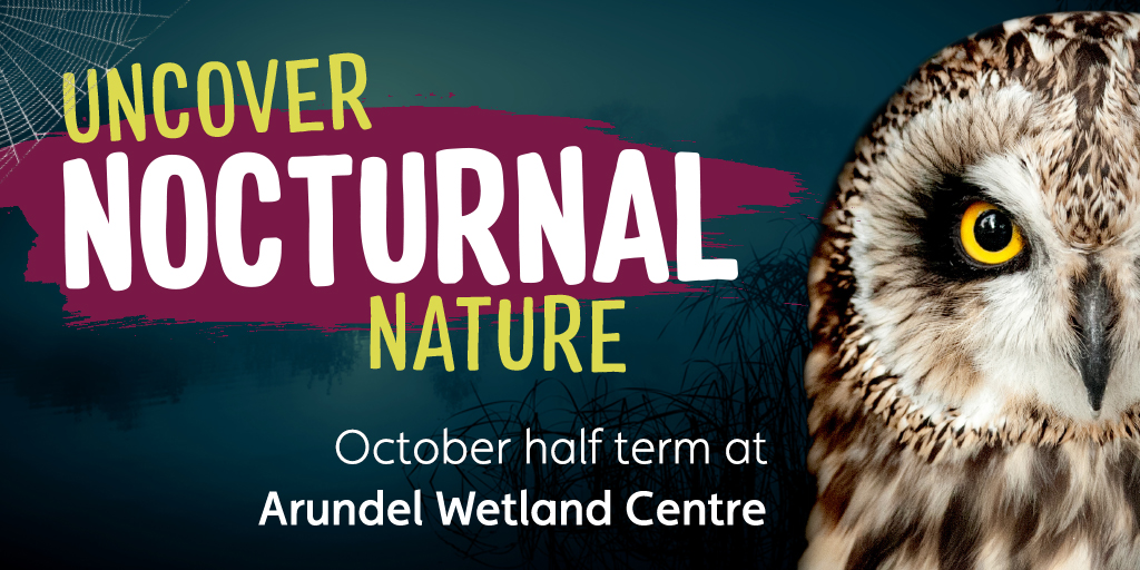 View: Nocturnal Nature half term