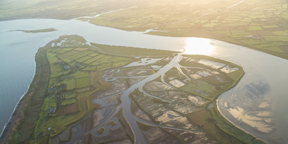 Salt marshes:  one of the most effective 'carbon sinks' on Earth