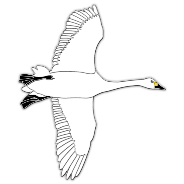 Bewick's swan flying pin badge