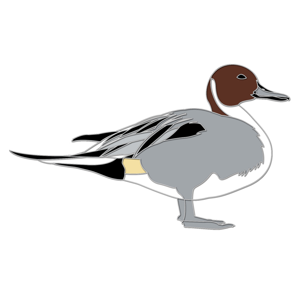 Pintail pin badge