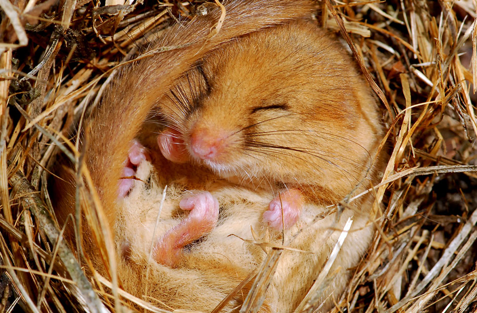 Which animals hibernate in the UK? And how you can help them