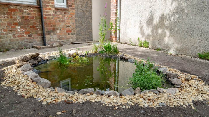 Build a wildlife pond