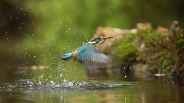 Healing power nature surviving cancer Kingfisher