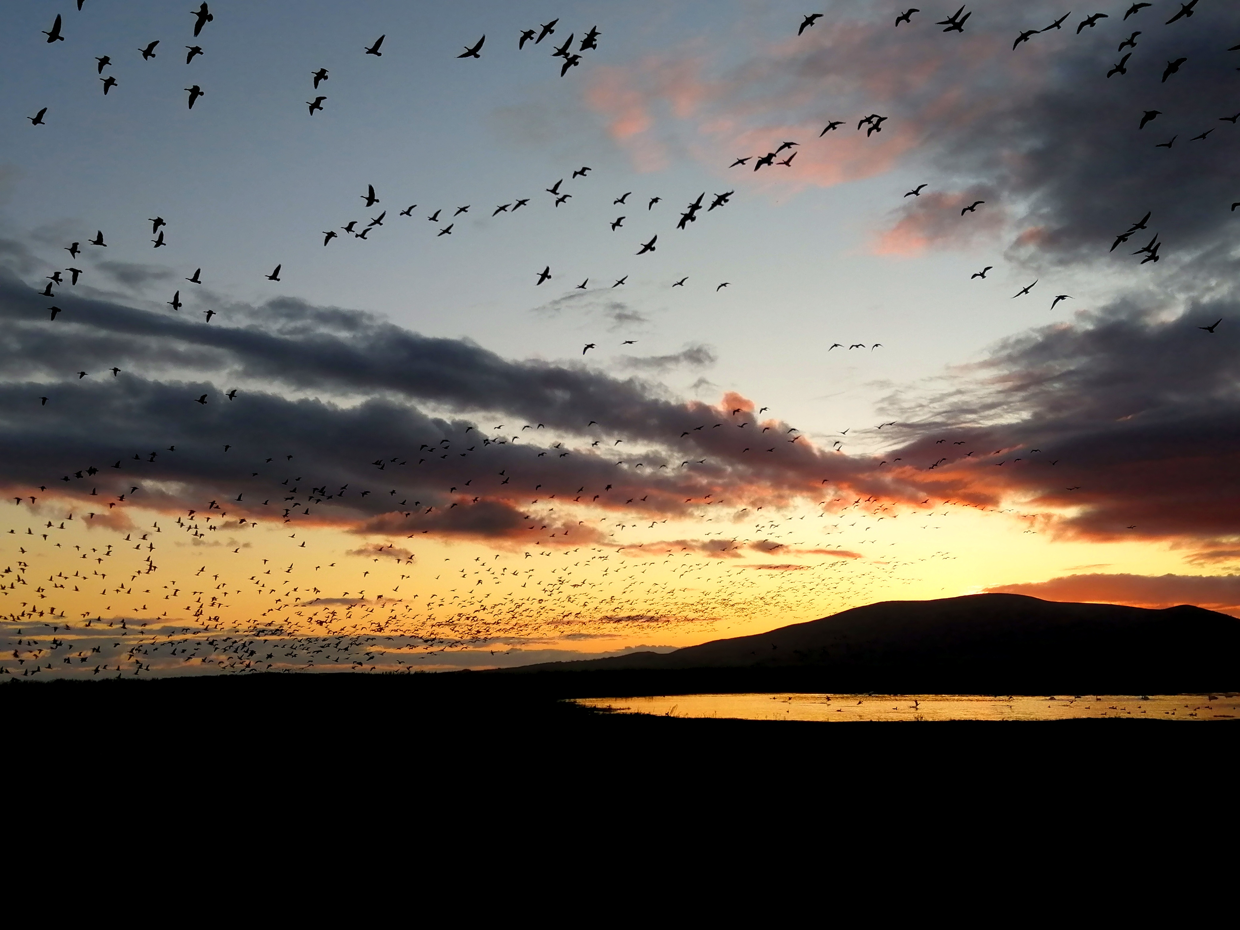 Wild Geese from Wardlaw
