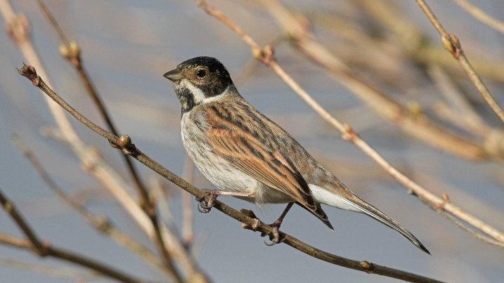 The Alternative Dawn Chorus Ten Quirky Wetland Bird Calls To Listen Out For Wwt