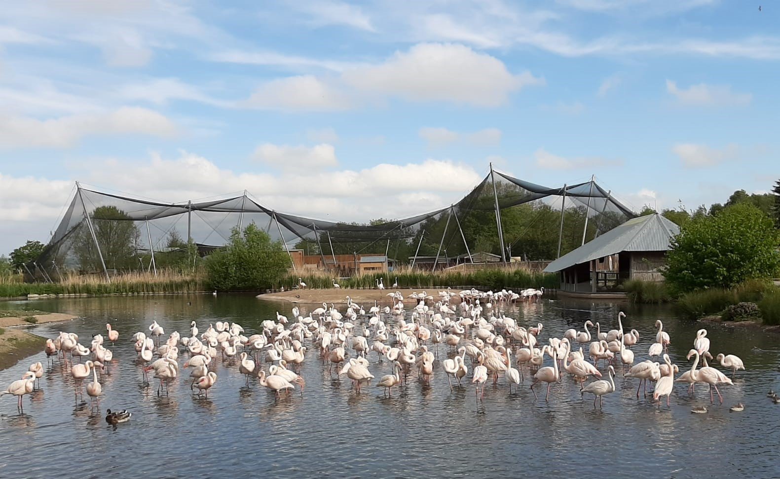 Closed but still caring: What's it like looking after a flamingo (or five hundred)?
