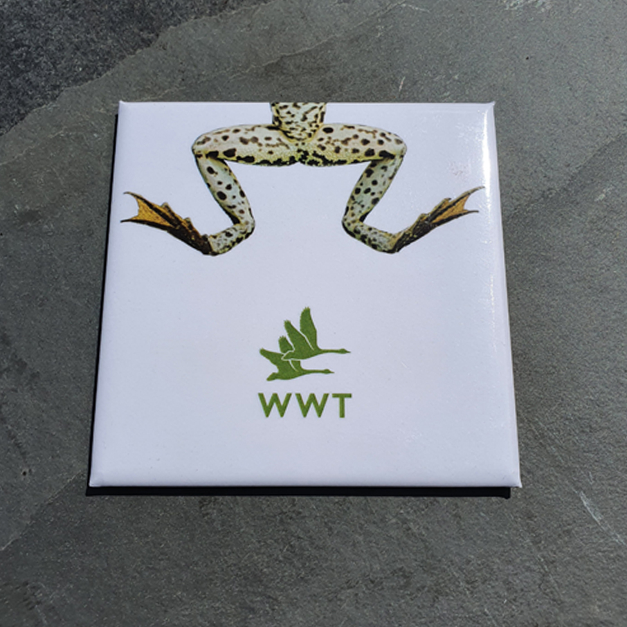 WWT Frog Square Magnet
