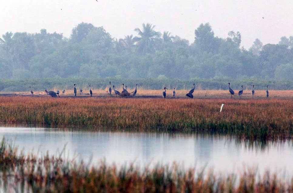The wetlands protecting Cambodia in times of crisis