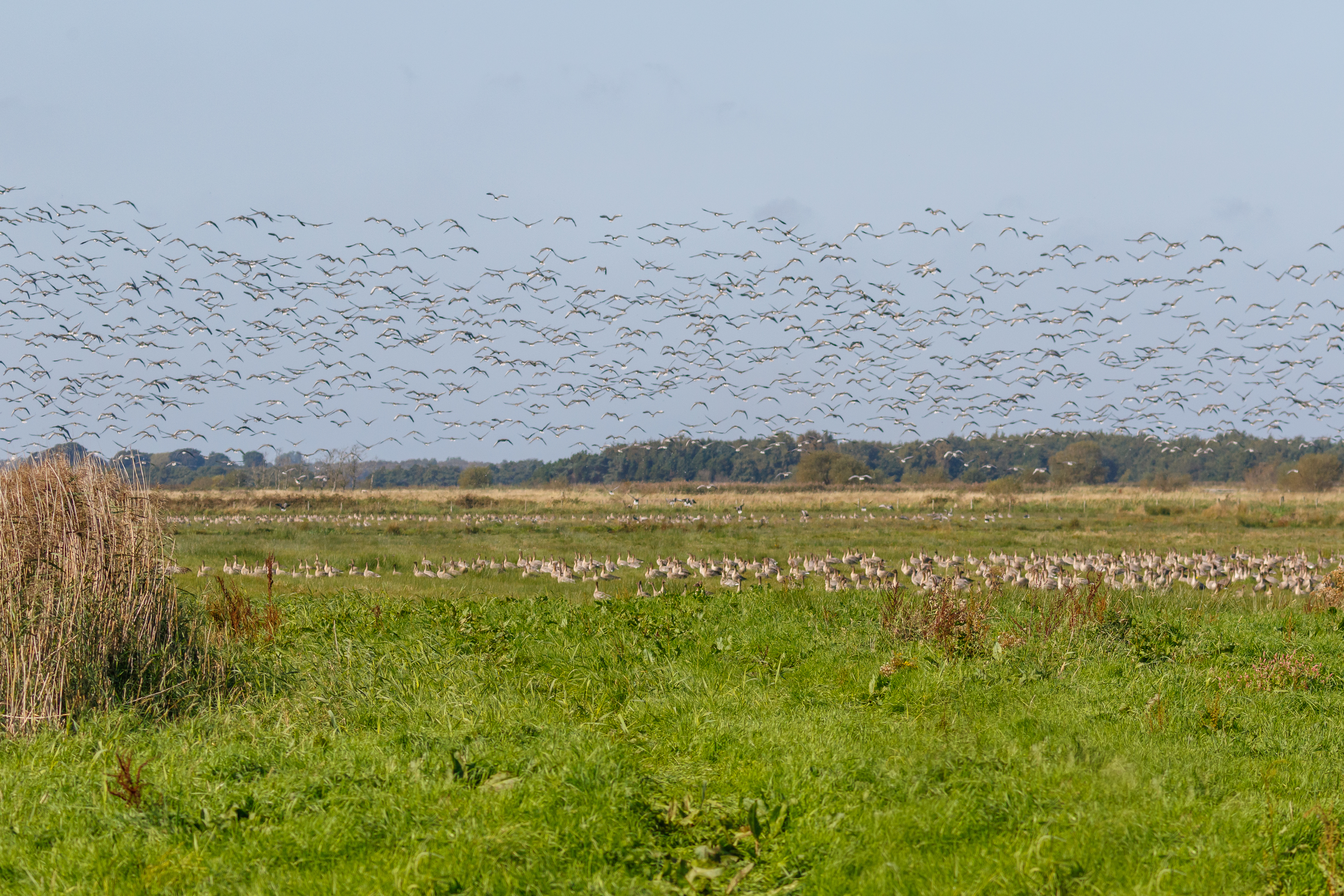 Fall for nature's spectacle at WWT Martin Mere this autumn