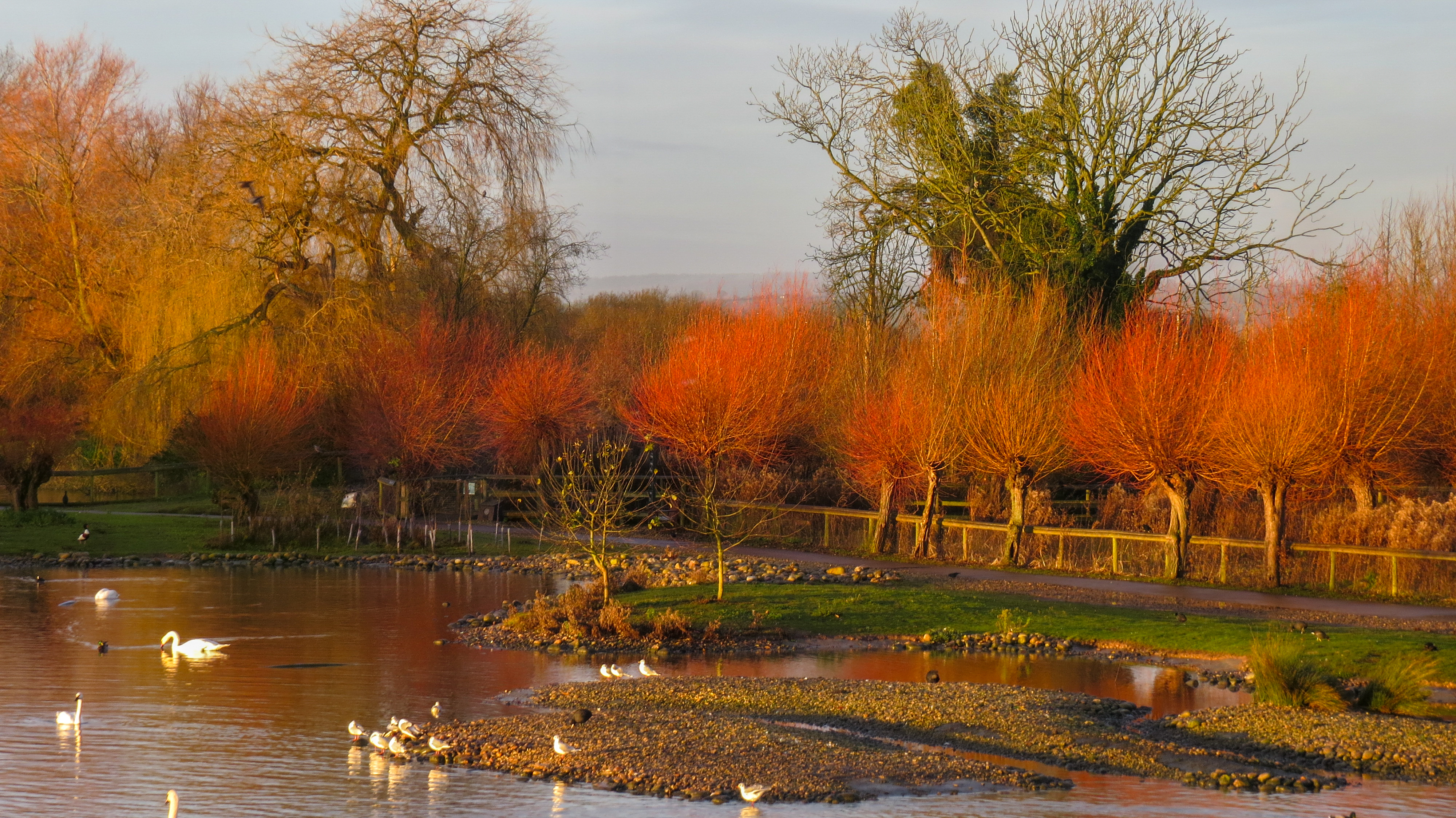 Fall for nature's spectacle at WWT wetland centres this autumn