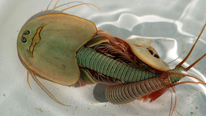 201028_CNT_halloween_article_images_triops.jpg