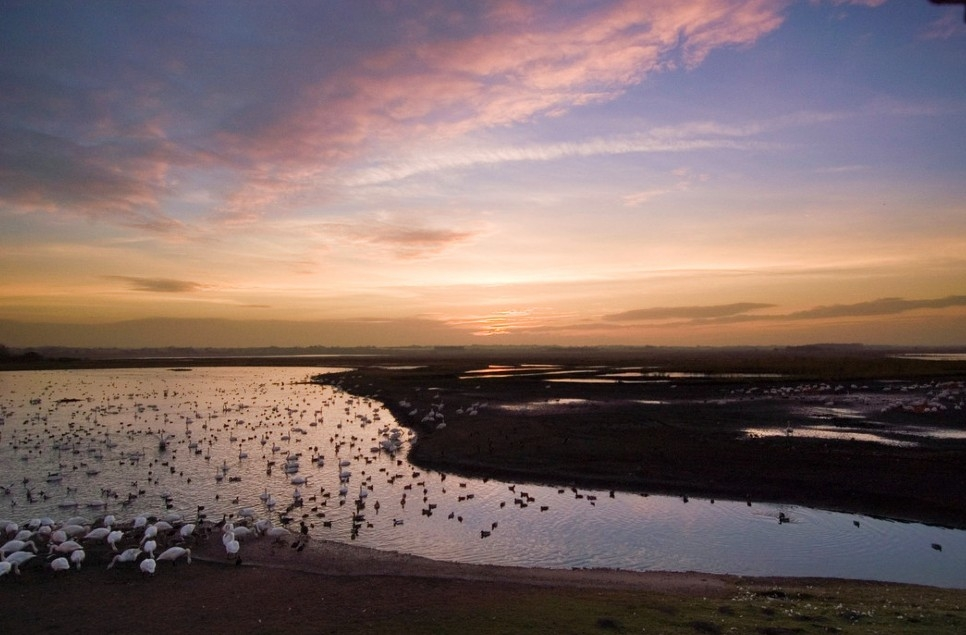 A spotlight on wetland wildlife - November 2020