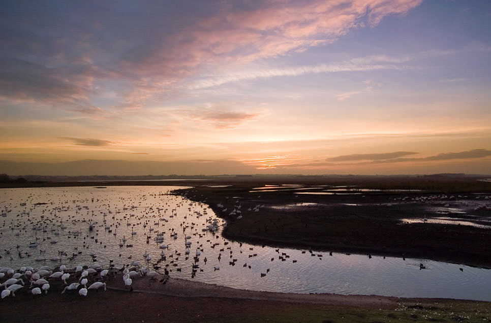 On World Wetlands Day charities collaborate to launch wetlands and wellbeing guide