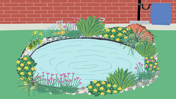 mini-pond-illustration-403x717.png